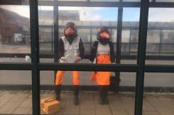 Oyster Catchers at the bus station